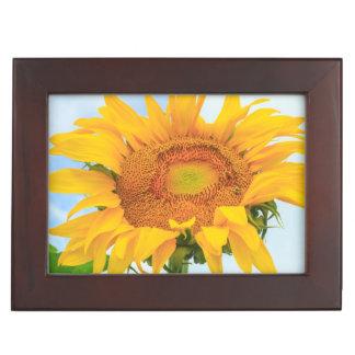 Sunflower, community garden, Moses Lake, WA, USA Keepsake Box