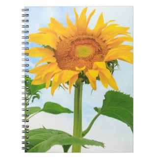 Sunflower, community garden, Moses Lake, WA, USA Notebook