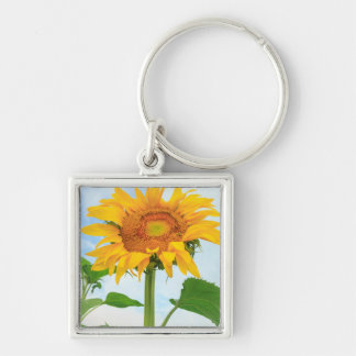 Sunflower, community garden, Moses Lake, WA, USA Silver-Colored Square Key Ring