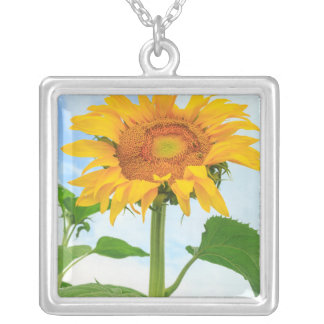 Sunflower, community garden, Moses Lake, WA, USA Silver Plated Necklace
