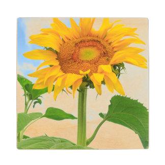 Sunflower, community garden, Moses Lake, WA, USA Wood Coaster