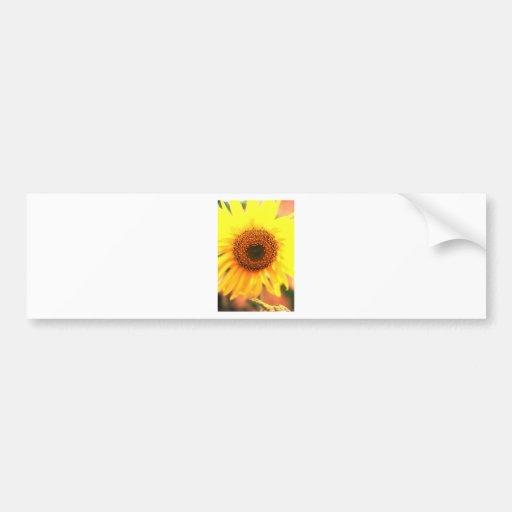 sunflower copy bumper sticker