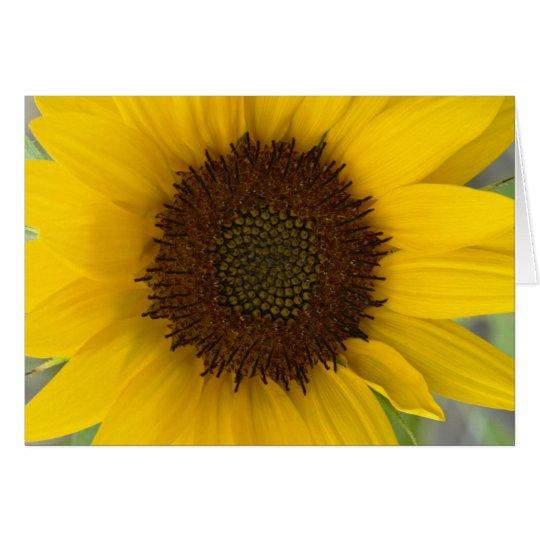 Sunflower Dark Centre Card