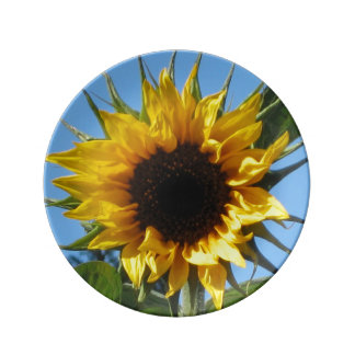 Sunflower - Decorative Porcelain Plate  8.5''