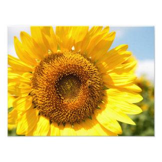 Sunflower Dream Photographic Print