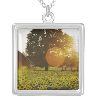 Sunflower Field At Sunset With A Barn Silver Plated Necklace