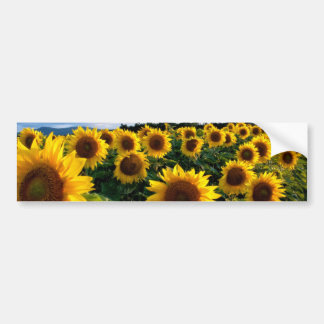 Sunflower Field Bumper Sticker