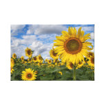 Sunflower Field Canvas 11.75 in x 18 in. Canvas Prints