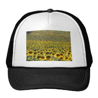 Sunflower Field Trucker Hats