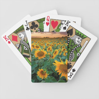 Sunflower Field in Longmont, Colorado Bicycle Playing Cards