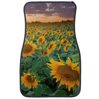Sunflower Field in Longmont, Colorado Car Mat