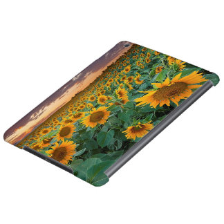 Sunflower Field in Longmont, Colorado Case For iPad Air