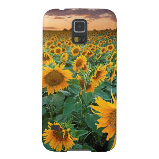 Sunflower Field in Longmont, Colorado Galaxy S5 Cover