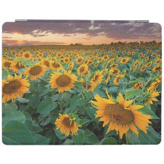 Sunflower Field in Longmont, Colorado iPad Cover