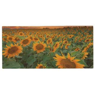 Sunflower Field in Longmont, Colorado Wood USB 2.0 Flash Drive