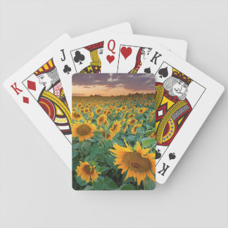 Sunflower Field in Longmont, Colorado Playing Cards