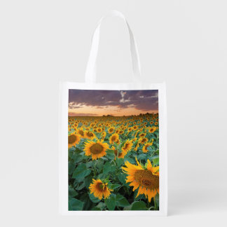Sunflower Field in Longmont, Colorado Reusable Grocery Bag