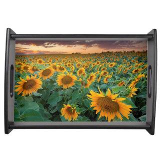 Sunflower Field in Longmont, Colorado Serving Tray