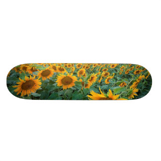 Sunflower Field in Longmont, Colorado Skate Board Deck