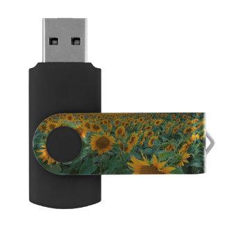 Sunflower Field in Longmont, Colorado Swivel USB 2.0 Flash Drive