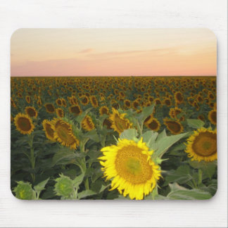 Sunflower Field Mouse Mat