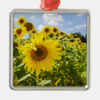 Sunflower Field Ornament