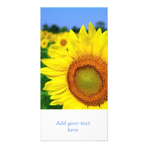 Sunflower field photo card template