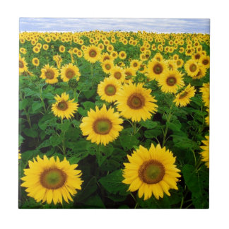 sunflower field tile