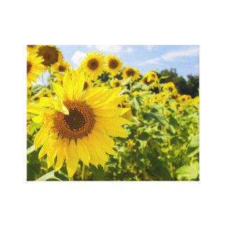Sunflower Field Wrapped Canvas