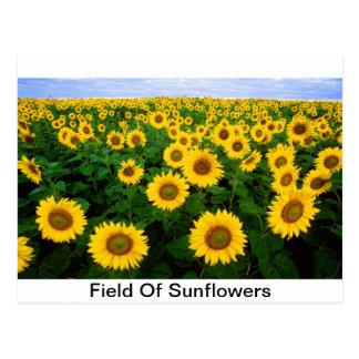 Sunflower Field Yellow Flowers Postcard