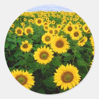 Sunflower Field Yellow Flowers Round Sticker