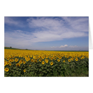 Sunflower Fields Blank Card