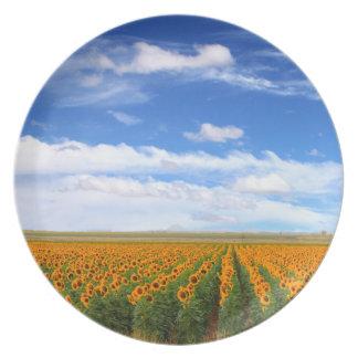 Sunflower Fields - Melamine Plate