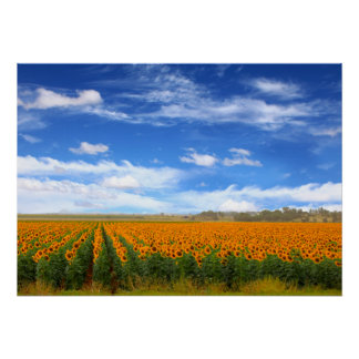 Sunflower Fields - Poster