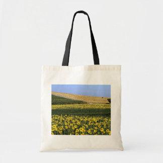 Sunflower fields, Tuscany, Italy