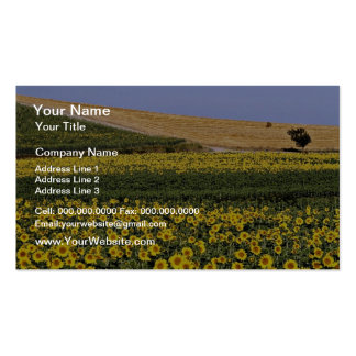 Sunflower fields, Tuscany, Italy  flowers Business Card