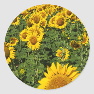 Sunflower fields, white hill town of Bornos Classic Round Sticker