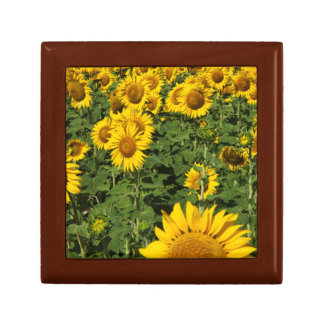 Sunflower fields, white hill town of Bornos Gift Box