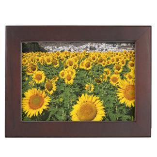 Sunflower fields, white hill town of Bornos Keepsake Box