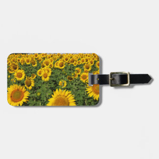 Sunflower fields, white hill town of Bornos Luggage Tag
