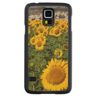 Sunflower fields, white hill town of Bornos Maple Galaxy S5 Slim Case