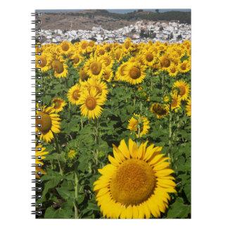 Sunflower fields, white hill town of Bornos Notebooks