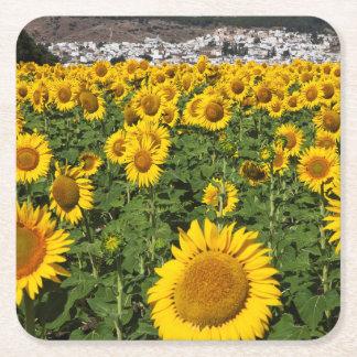 Sunflower fields, white hill town of Bornos Square Paper Coaster