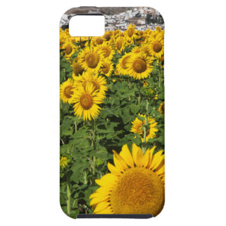 Sunflower fields, white hill town of Bornos Tough iPhone 5 Case