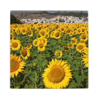 Sunflower fields, white hill town of Bornos Wood Coaster