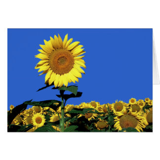 Sunflower Floral Blank Greeting Note Card