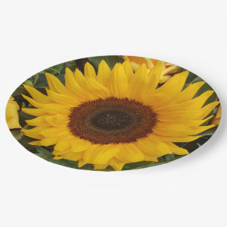 Sunflower Flower Floral Photography Plates