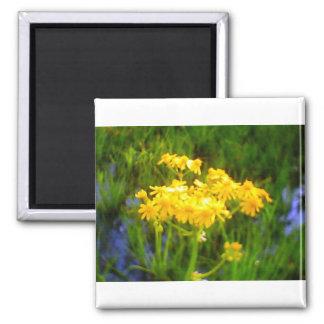 Sunflower Flower Magnet