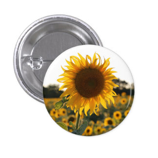 Sunflower garden.Beautiful flowers 3 Cm Round Badge