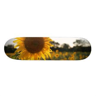 Sunflower garden.Beautiful flowers Custom Skate Board
